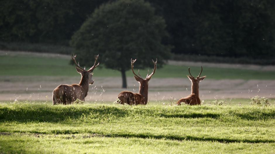 Richmond Park is a huge open space West of Olympia London